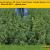 Кормовые  травы «Barenbrug» - Изображение1